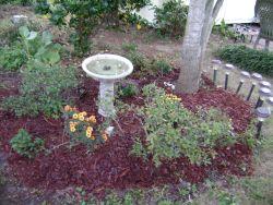 garden, birdbath