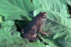 toads, gardening